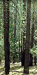 img_home_forestry.jpg